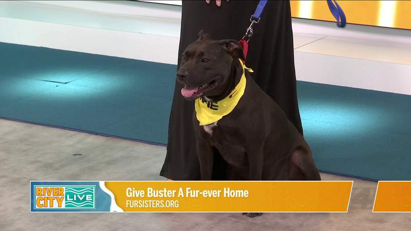 Give Buster A Fur-ever Home at Fur Sisters   River City Live