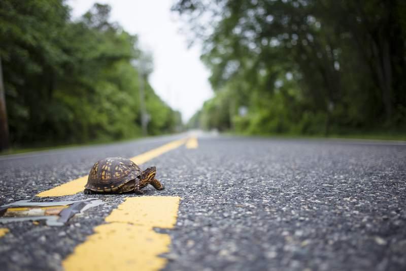 Reclaimednj Photo: www.flickr.com